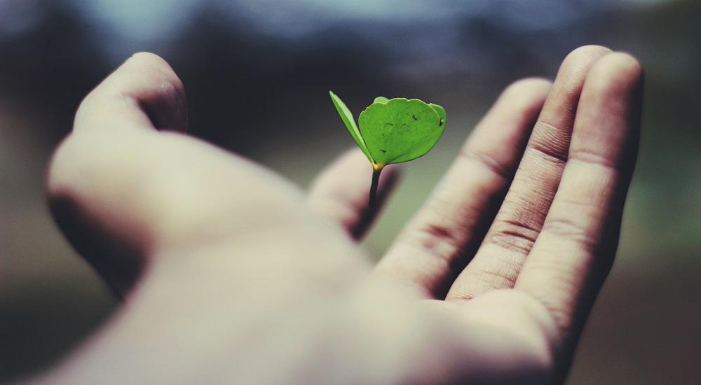 Ecologiepremie
