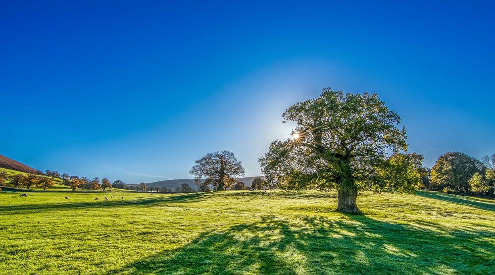 Fördermöglichkeiten für Umweltschutz Klimaschutz Naturschutz