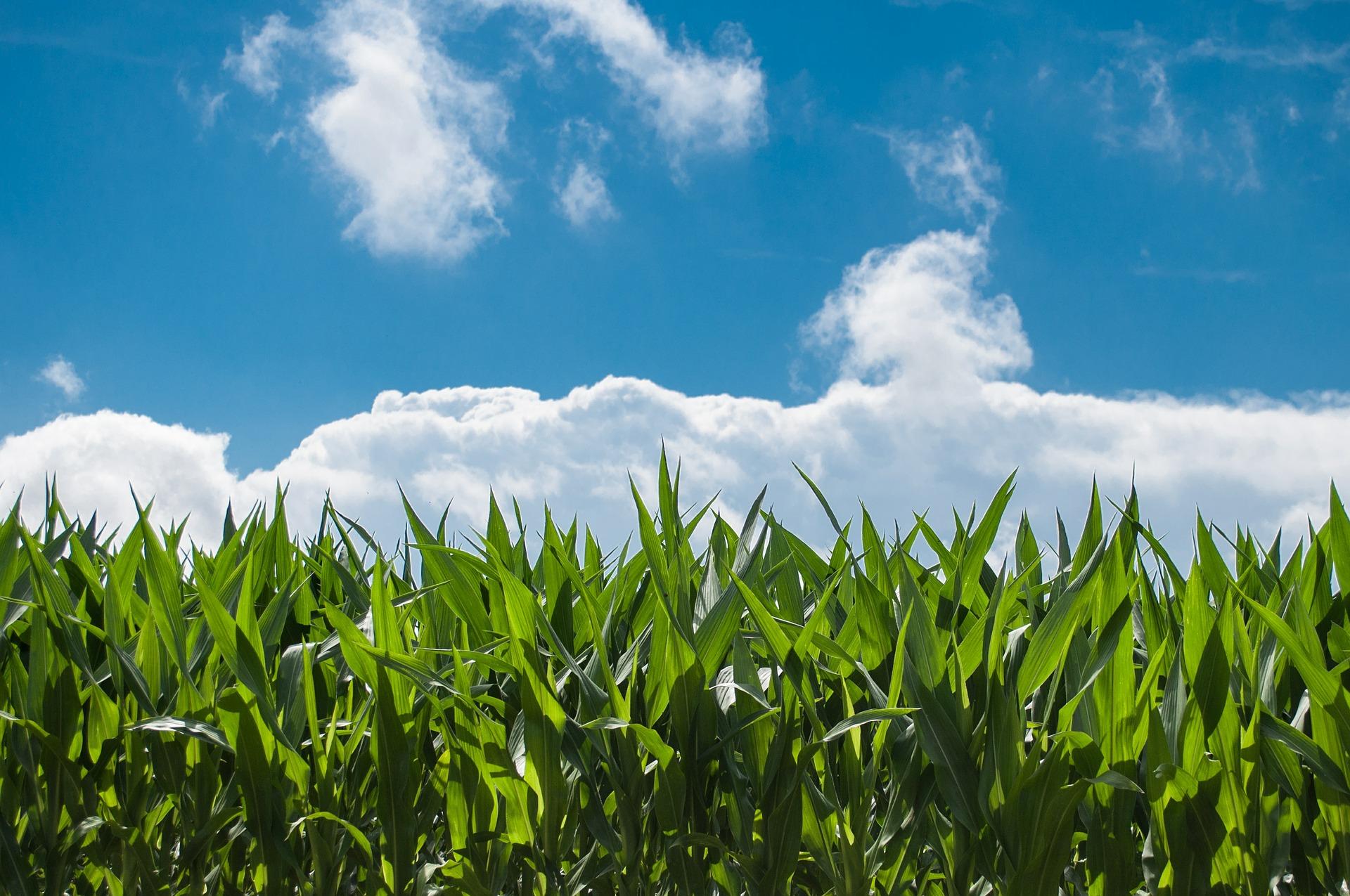 Ideenwettbewerb neue produkte für die bioökonomie