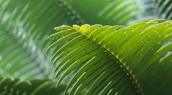 LIFE-subsidie aanvragen voor milieu en klimaat
