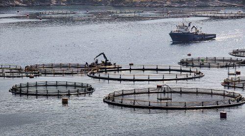Subsidie innovatieve aquacultuur