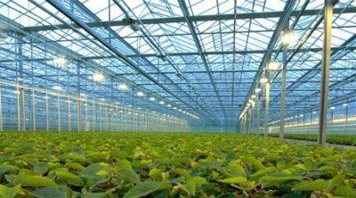 Subsidies voor glastuinbouw