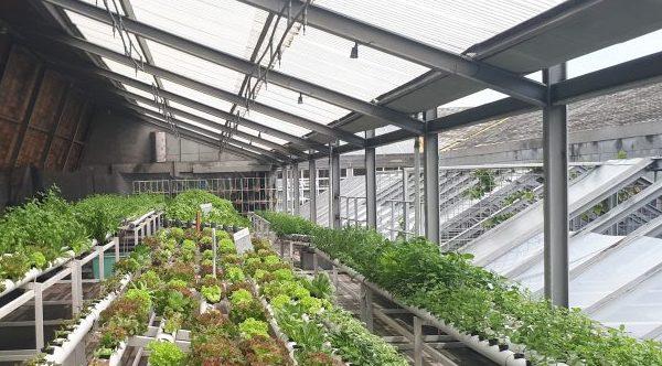 MIT haalbaarheidsprojecten deadline voor oa agrisector