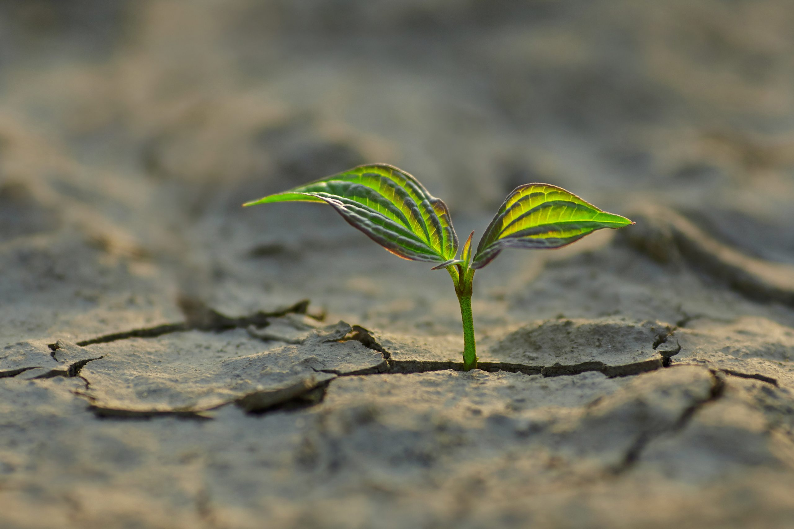 LimburgToekomstbestendig: Subsidie voor slimme, duurzame en/of gezonde innovaties